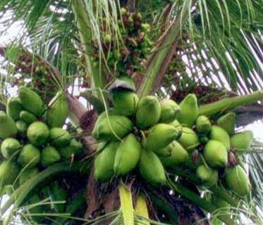 Karshika Keralam – Department of Agriculture Development and Farmers