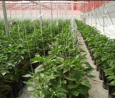 Karshika Keralam – Department of Agriculture Development and